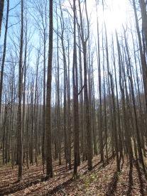 arbres naturistes